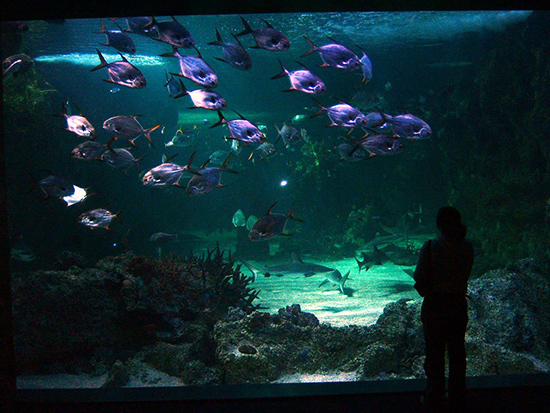 Corrosion In Public Aquariums